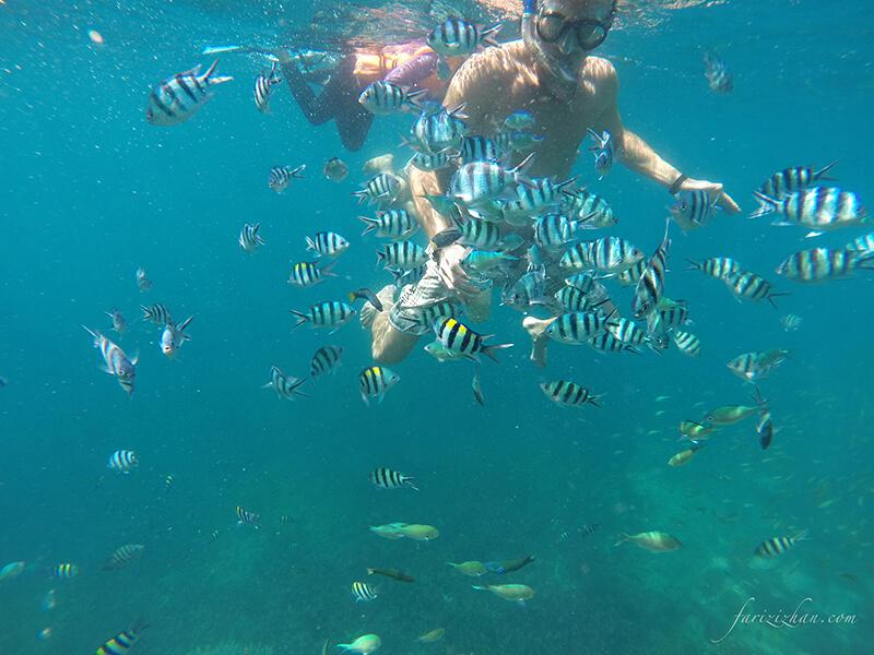 snorkeling-fish-underwater-perhentian-island