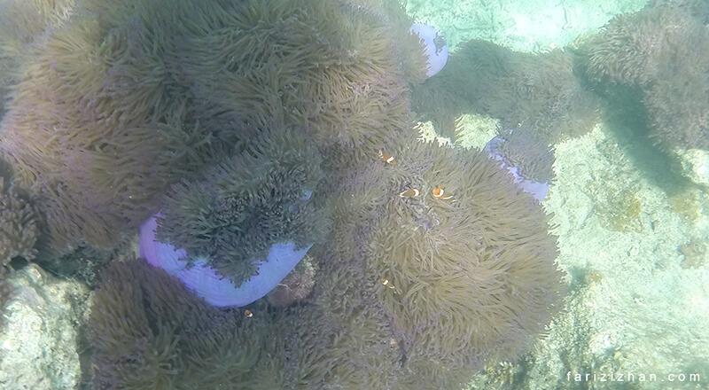 underwater-pulau-perhentian