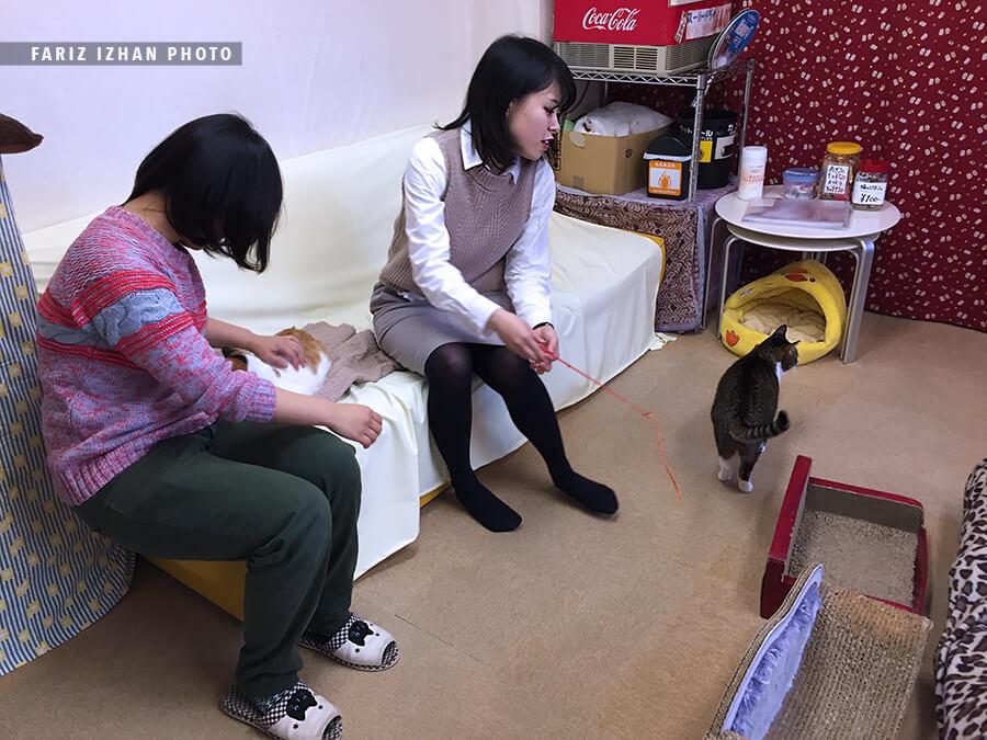 tokyo cat house
